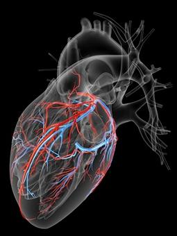 Осложнения сахарного диабета - сердечно – сосудистая система