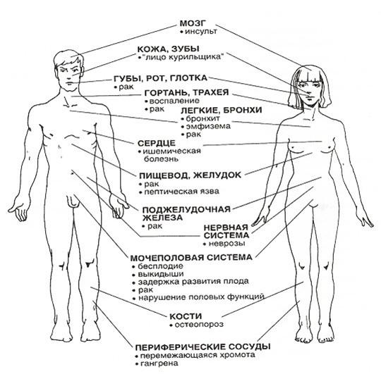 Влияние курения на организм человека, Правила здорового образа жизни