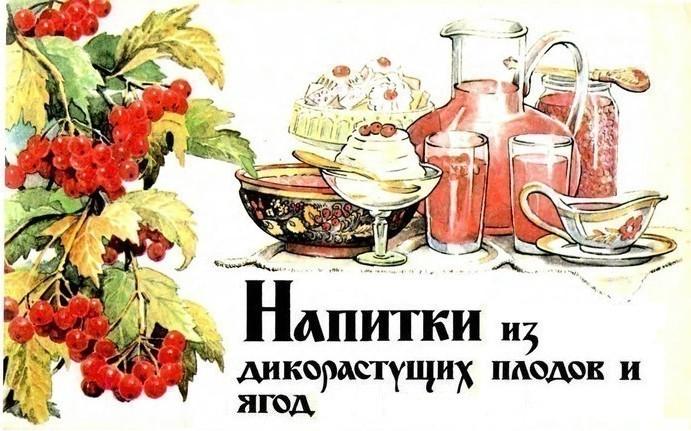 Напитки из дикорастущих плодов и ягод